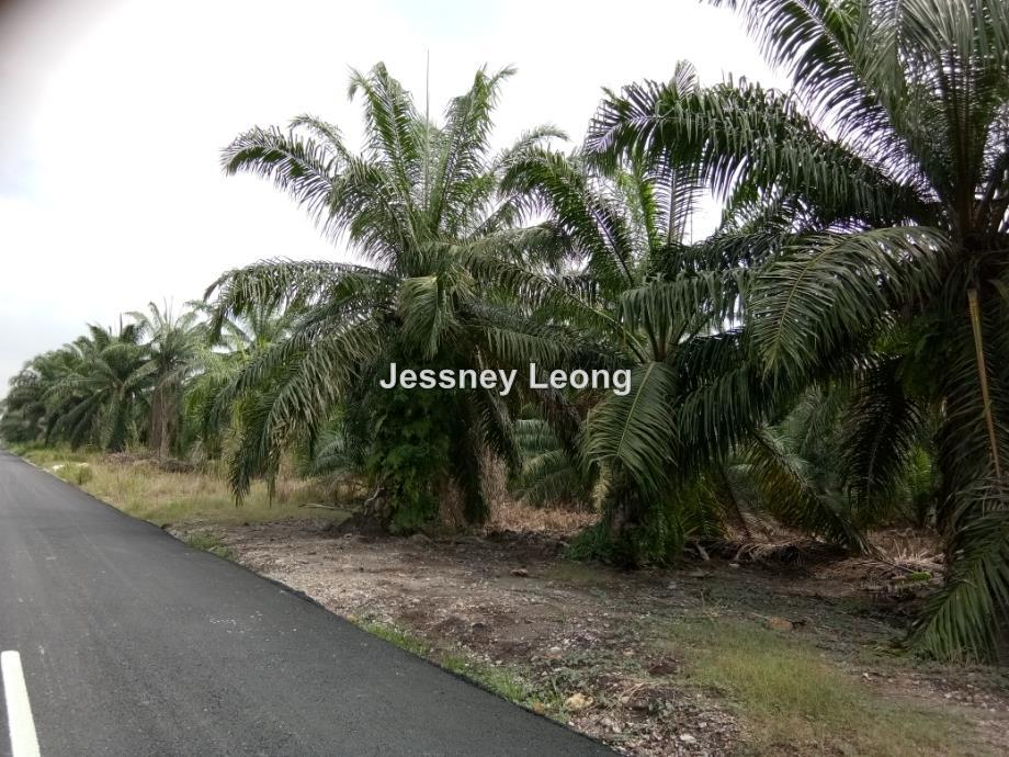 Agriculture land, Jenjarom, Kuala Langat, Jenjarom