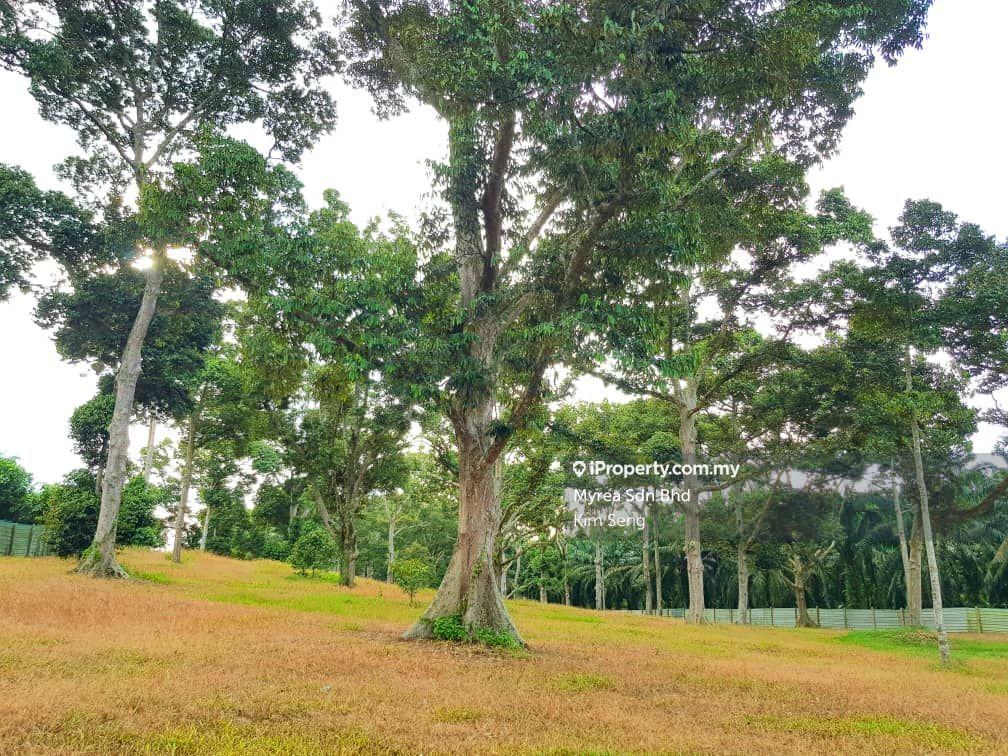 Ayer Hitam-Kluang Durian Farm 3acres, Ayer Hitam-Kluang, Ayer Hitam