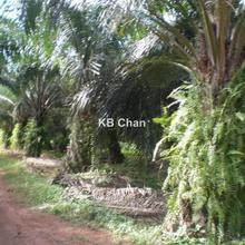 Sungai Petani Near Butterworth Penang, 80ac Main road Oil Palm sungai Petani SP, Sungai Petani