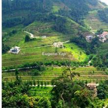 Berjaya Hill,Bukit Tinggi, Bentong