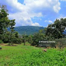 Dusun Musang King, Bedong