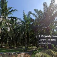 64 acres Palm Oil Land at Bukit Selambau   FOR SALE , Bukit Selambau, Sungai Petani