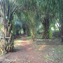 251 Acres Oil Palm Land in Kulim , Kulim