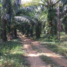 15.9 acres land at Slim River, Slim River, Tanjung Malim