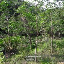 Tanah Kebun 5 Ekar Tanah Merah Kelantan, Tanah Merah Kelantan, Tanah Merah