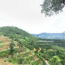 Bentong Karak Agriculture Land , Karak, Bentong