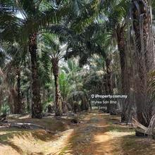 Jalan Renggam Agricuture to Industrial Land, Kluang