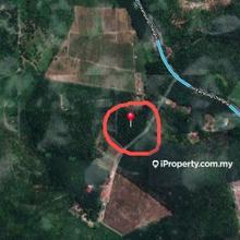 Tanah Pertanian sawit, Kampung Changhai, Sik