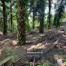 Pedas @Seremban , Agriculture land with Plants, Pedas