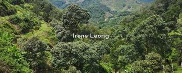 9.025 ac Bentong Near Lee Rubber 80% Matured MK Durian Land For Sale, Bentong 1