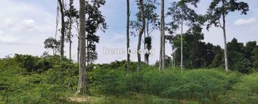 8.868 acres Karak (Lengkong) Vacant Land For Sale, Karak 1