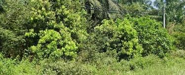 [Kulim-Padang Meha] 12 ac Heavy Industry Development Land Located at Padang Meha, Kulim., padang meha, Kulim 1