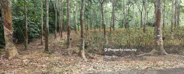 Rubber trees land  for sale , Kesang Pajak, Melaka Tengah 1