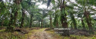 7 ac Lanchang near Toll Oil Palm Land For Sales , Lanchang 1