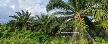 6 Acres Lanchang Facing Main Road Oil Palm Land for Sale, Lanchang 1