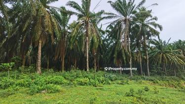 Super Deal: Lendu Hill Freehold Agriculture Land For Sell, Lendu Freehold Agriculture Land for sell-Non Bumi, Alor Gajah 1