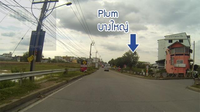 plum 16