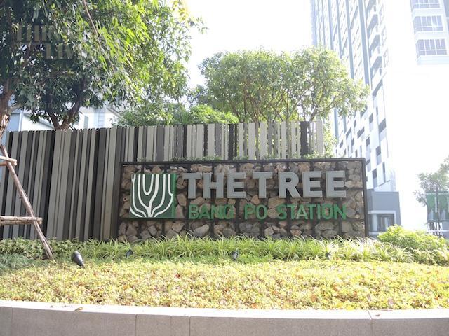 the tree 29