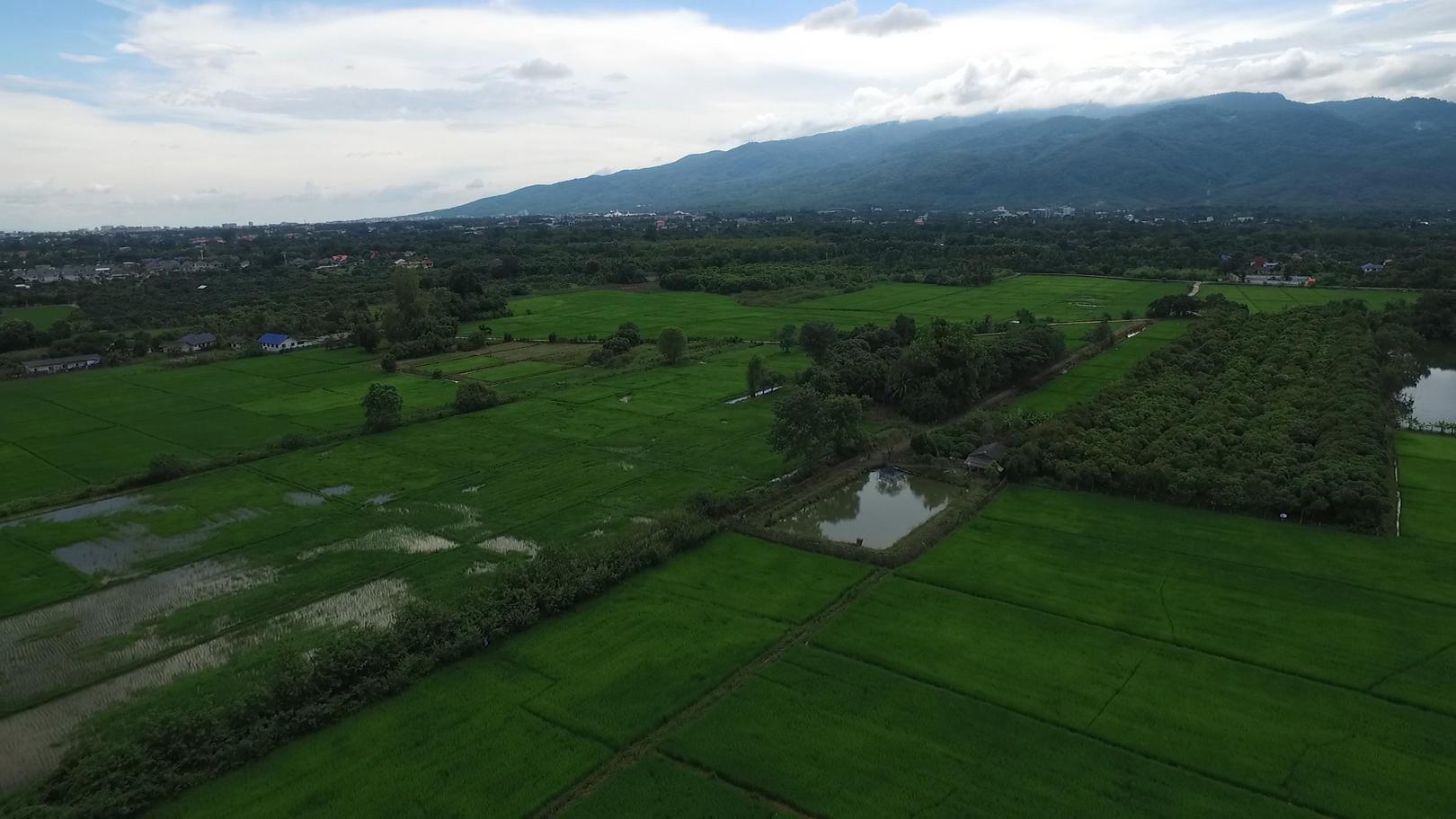 Chiangmai0010